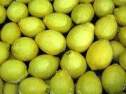 瀬戸田産レモン